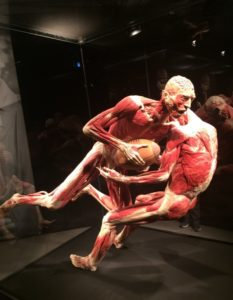 Body Worlds Blog Back In Action